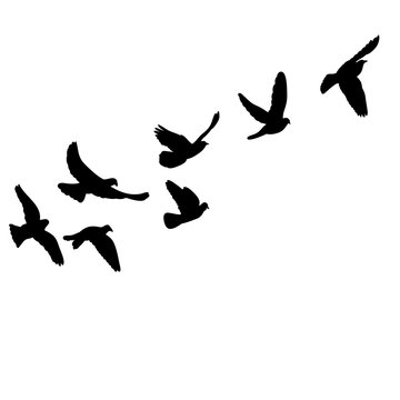 isolated set of flying birds silhouettes