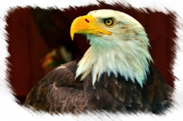a photograph of a bald eagle in the picture