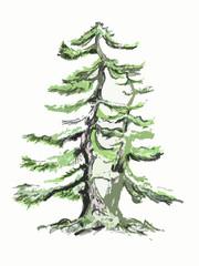 Bonsai tree, pine drawing, pine drawing.
