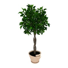 small tree on pot for office