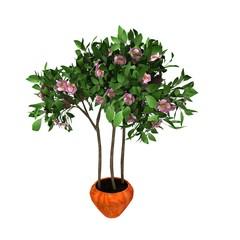 pink flower plant on pot