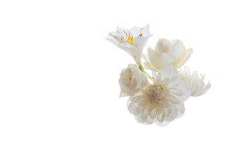 white flower delicate plant pink fresh chrysanthemum close-up postcard isolated background golden-daisy many roses bouquet