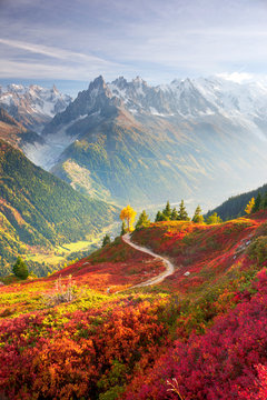 Red autumn Chamonix in the Alps