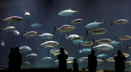 Visitors look at bluefin tunas swimming in a tank at the Tokyo Sea Life Park in Tokyo
