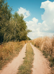 Wall Mural - Country road in forest and sky