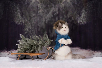 the cat in the winter forest came for the Christmas tree