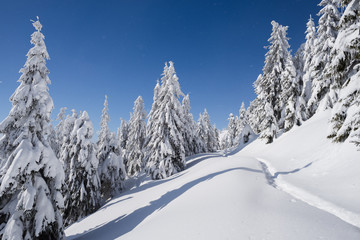 Fototapete - Winter nature with spruce forest and footpath in the snow