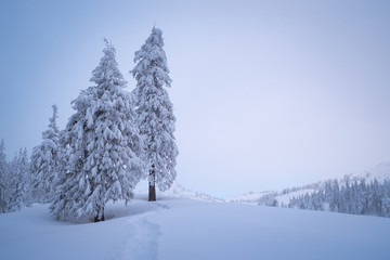 Fototapete - Winter landscape with copy space and fir trees