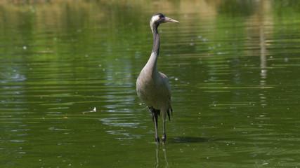 for Eliminare acqua verde laghetto