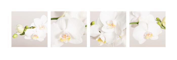 Wall Murals Orchid Fotocollage von 4 Orchideenbildern, ideal zur Gestaltung Ihrer Wand