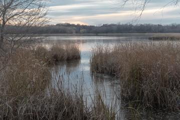 Autumn landscape on a marsh in Minnesota