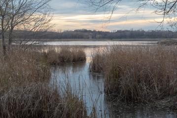 Autumn scene on a pond in a marshland