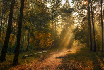 sun rays play in the branches of trees. autumn forest. autumn colors. morning.