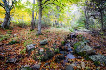 Paisaje otoñal bosque rio