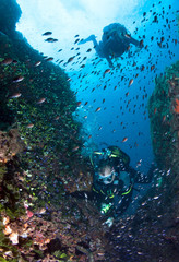 Scuba Divers observe a school of fish on a coral reef.