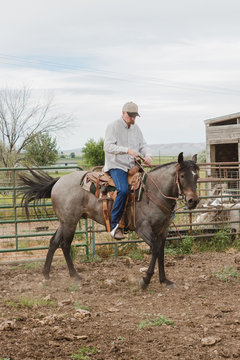 man rides young colt in corral