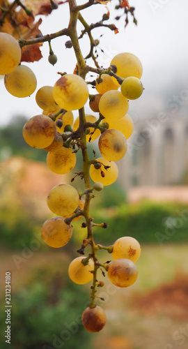 A bunch of grapes, in the background a medieval stone bridge