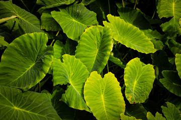 Green leaf texture. Leaf texture background