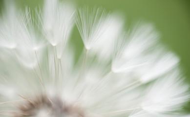 Close-up of a blowball / Nahaufnahme einer Pusteblume