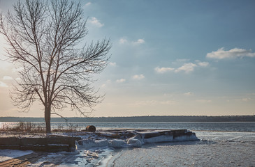tree on the winter beach