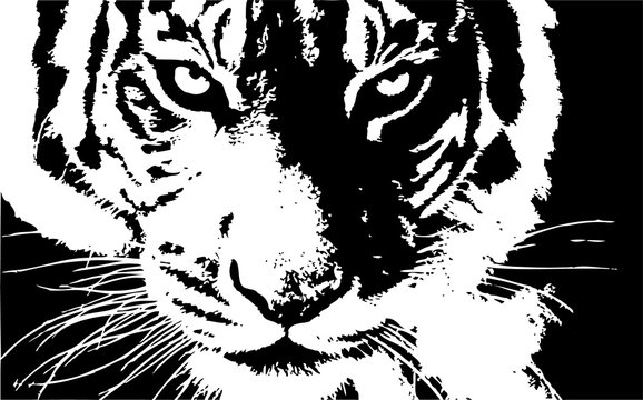 tiger head hand drawn vector