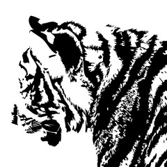 silhouette of a tiger head hand drawn vector