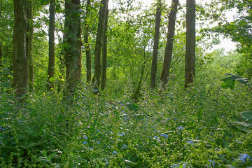 British woodland in summer