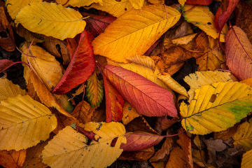 random leaves autumn color abstract full rainbow