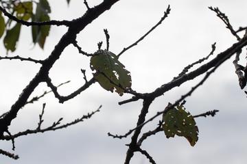 枯れ葉と枝のシルエット
