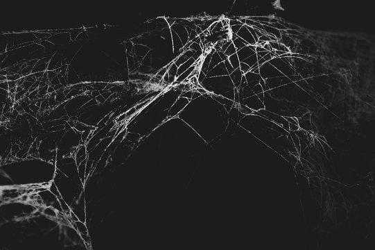 Spider web in the dark