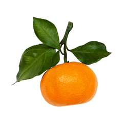 Closeup of tangerine with green leaves