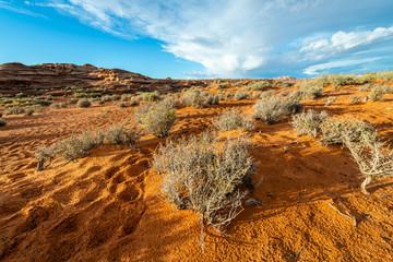 Wall Mural - The Utah Desert at Golden Hour