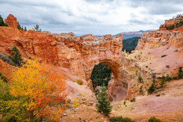 Wall Mural - Bryce Canyon's Natural Bridge