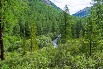A small river in the Altai Mountains. Russia.