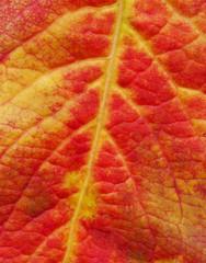 Red leaf texture. Minimal creative idea.