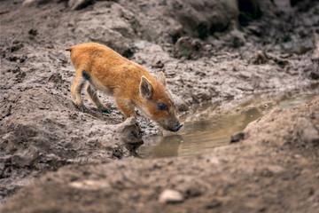 If you are small a puddle becomes a lake - wenn du klein bist, wird eine Pfütze zum See