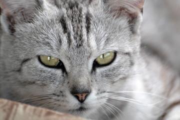 kot cat