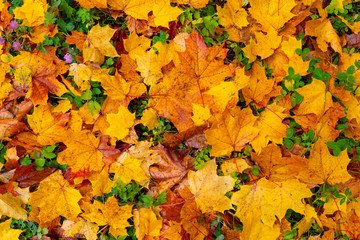 Colorful autumn foliage background