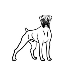 Boxer dog - isolated outlined