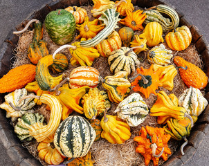 Pumpkins. Varietes. Basket. Autumn. Color. Outdoor