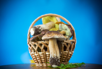 forest fresh natural mushrooms boletus on a blue