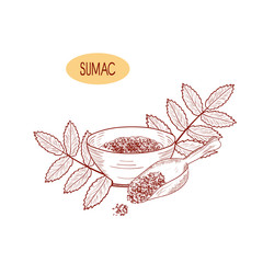 Sumac. Branch with leaves. Bowl with seasoning and scoop. Sketch. On a white background. Monophonic