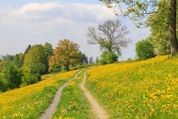 Frühling im Allgäu