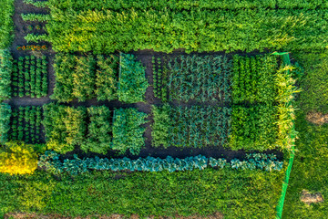 Small farm field, growing vegetables.