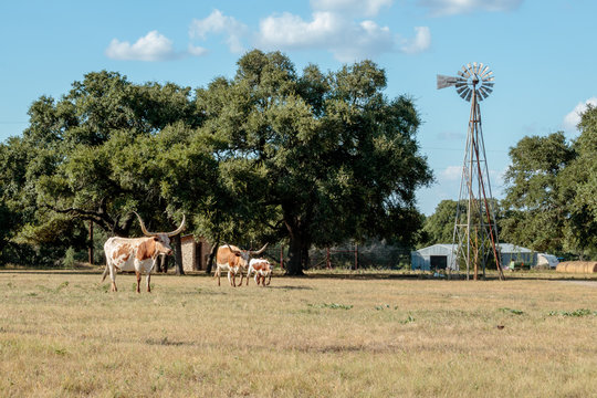 herd of cows grazing in a field