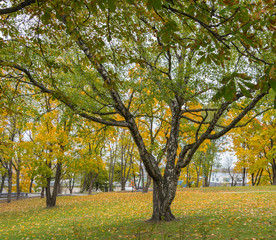 Natural autumn background. Autumn trees in the city park.