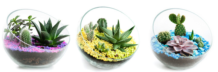 set of florarium in glass, cacti and succulents are isolated on a white background, collage
