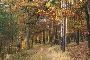 Jesienny krajobraz 1