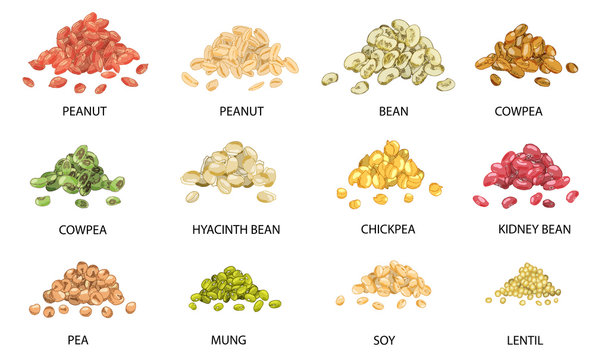 Set of hand drawn colored piles of beans seeds. Vector illustration.