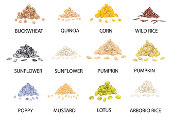 Set of hand drawn colored piles of cereal grains. Vector illustration.